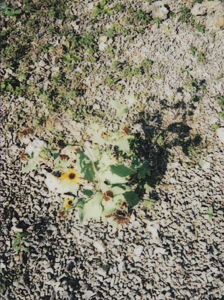 photographs : alga : 1