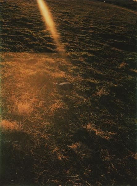 photographs : alga : 18