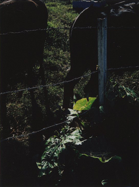 photographs : alga : 2