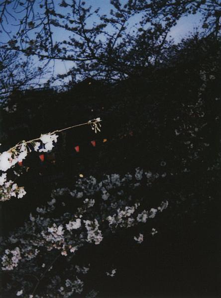 photographs : alga : 22
