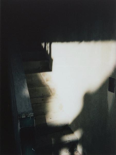 photographs : alga : 23