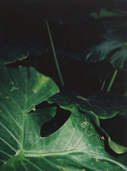 photographs : alga : 29
