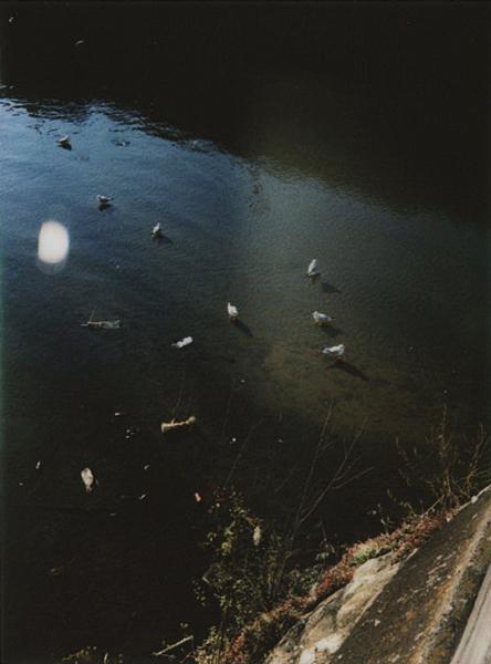 photographs : alga : 3
