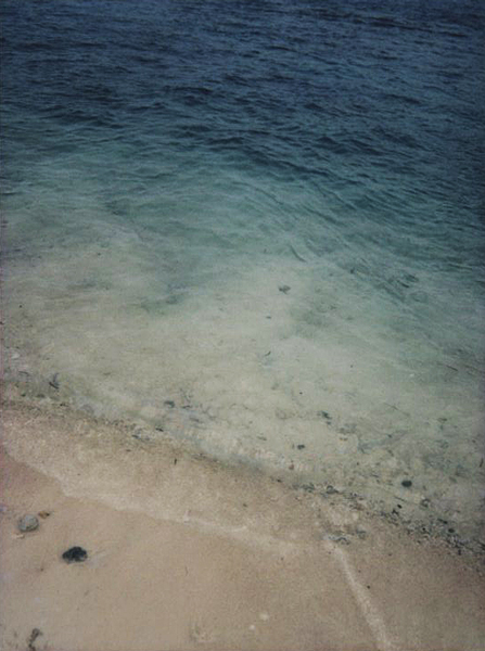 photographs : alga : 32