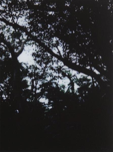 photographs : alga : 34