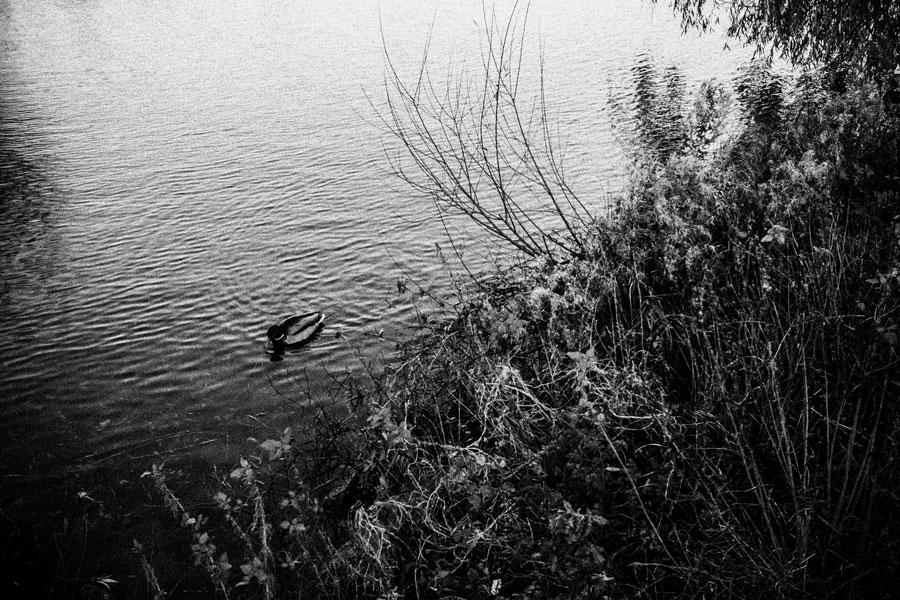 photographs : copenhagen : 12