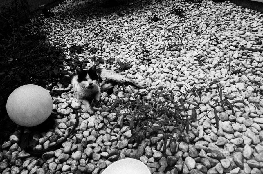 photographs : moonstone : 25