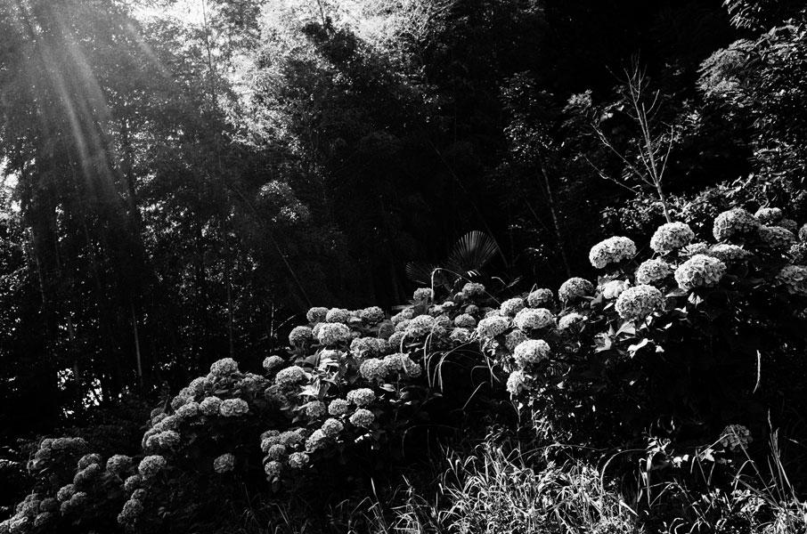 photographs : moonstone : 39