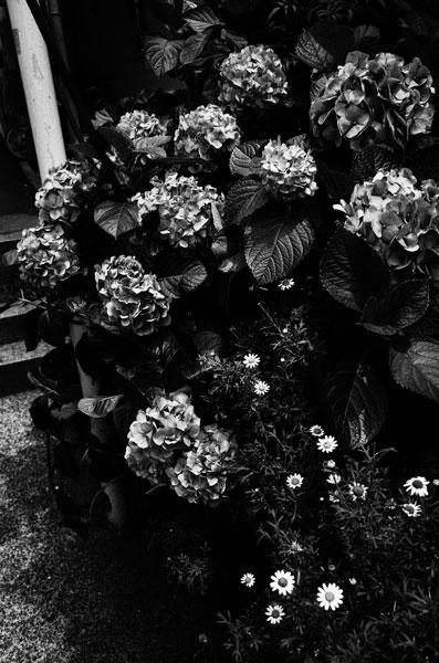 photographs : moonstone : 61
