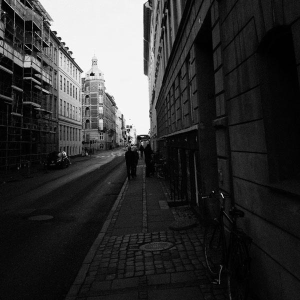 photographs : primula 11