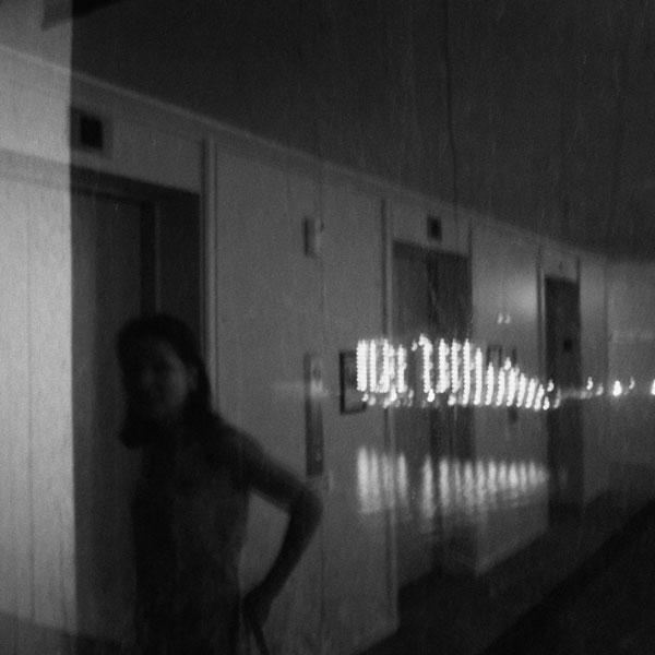photographs : primula 13