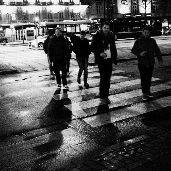 photographs : primula 14