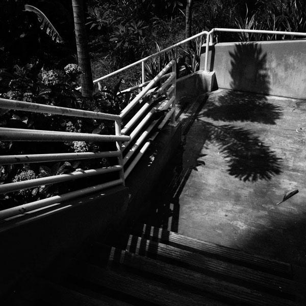 photographs : primula 18