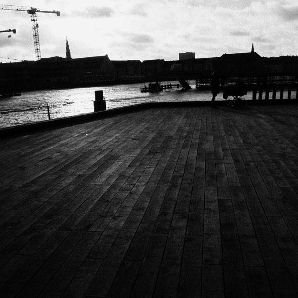 photographs : primula 2