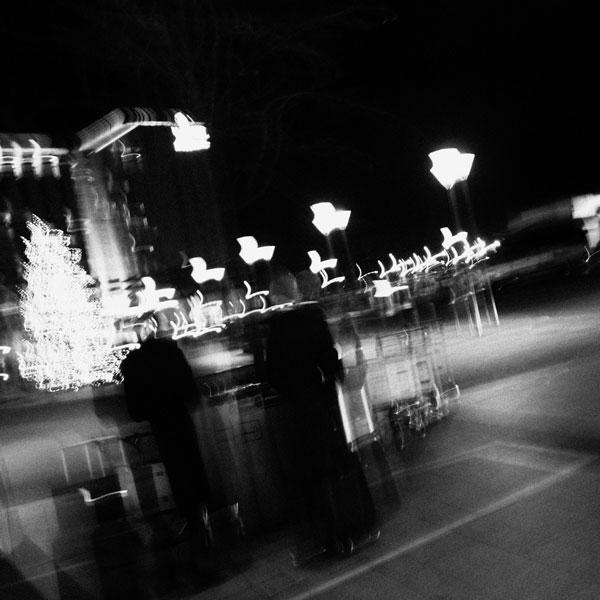 photographs : primula 21