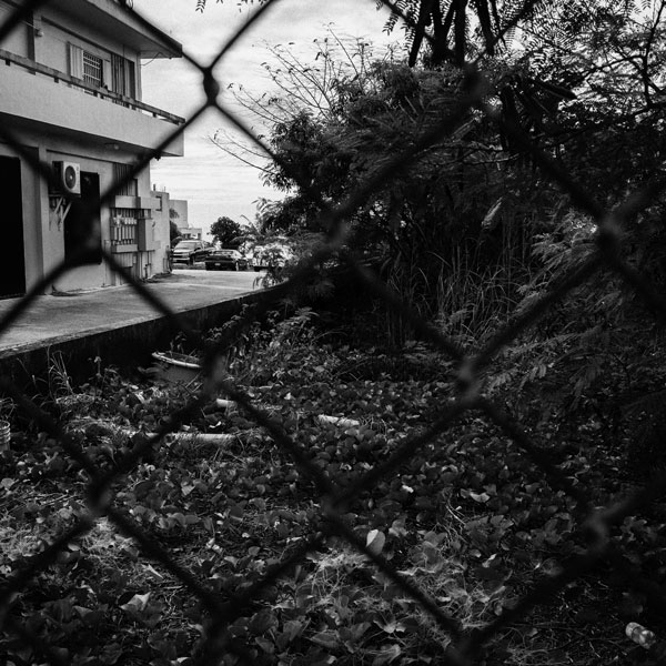 photographs : primula 22