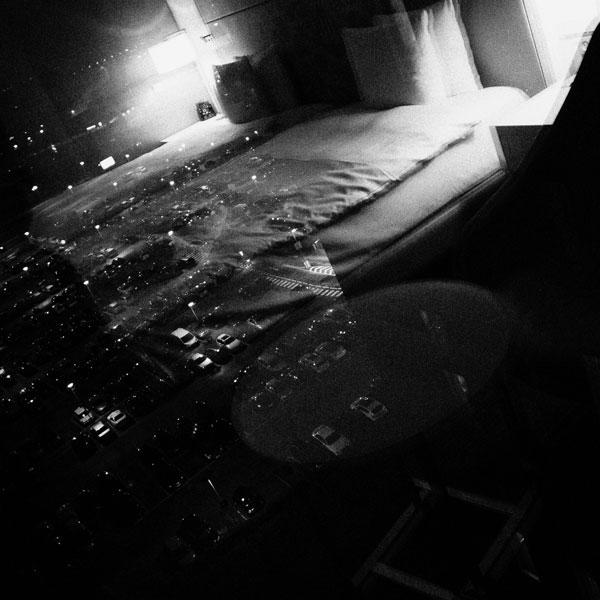 photographs : primula 3