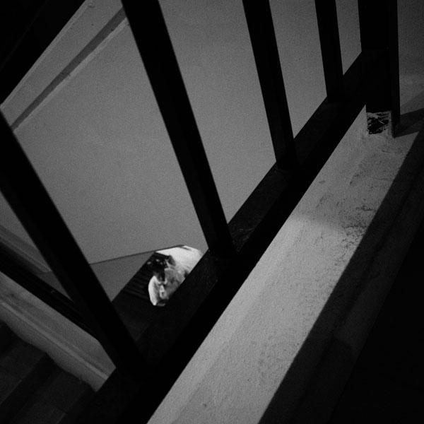 photographs : primula 30