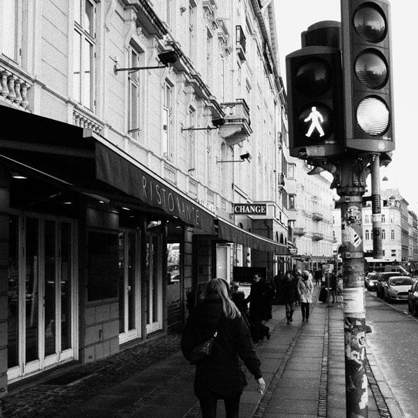 photographs : primula 36