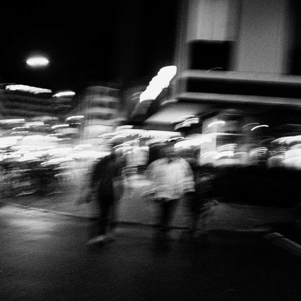 photographs : primula 38