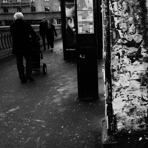 photographs : primula 40
