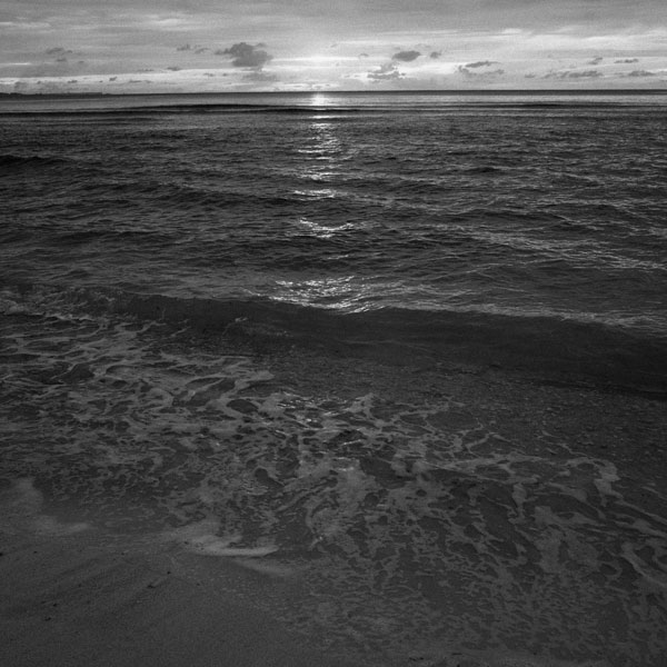 photographs : primula 44