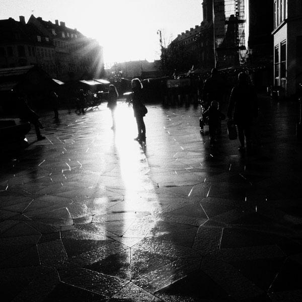photographs : primula 45