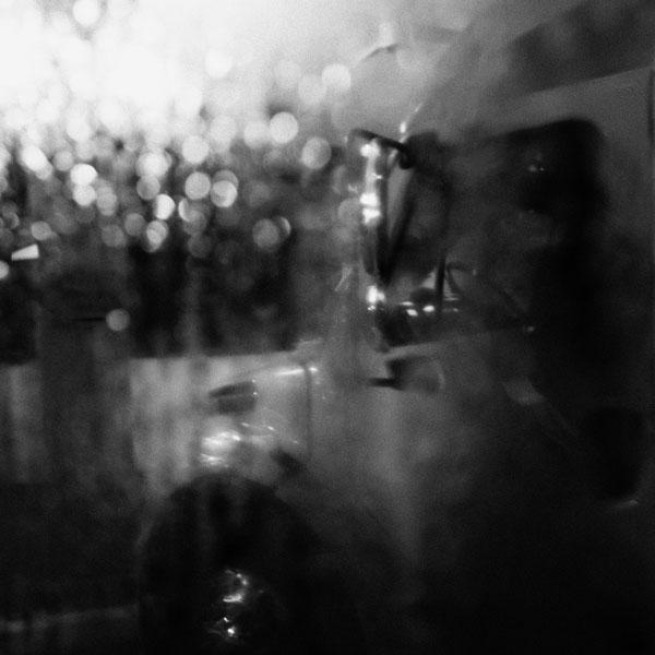 photographs : primula 49