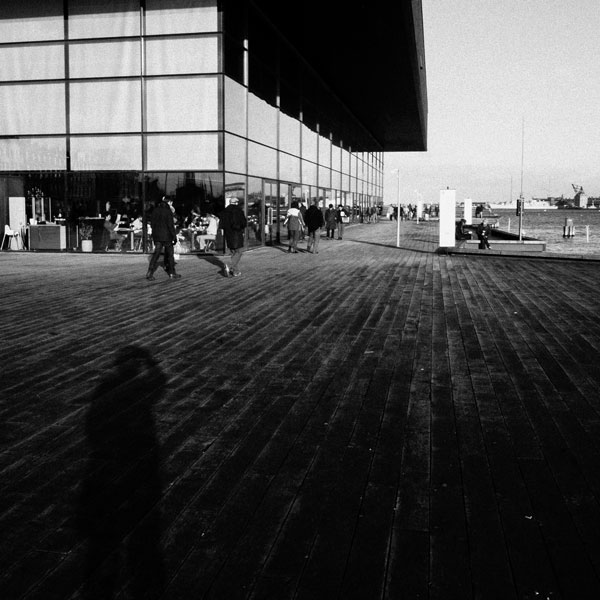 photographs : primula 50