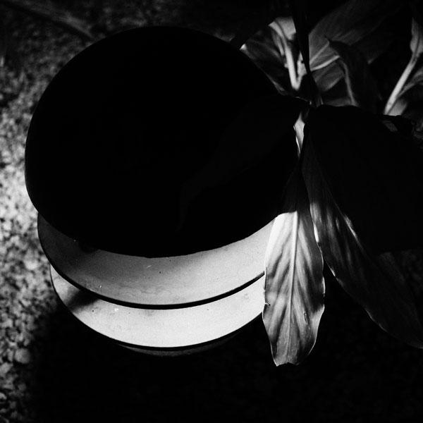 photographs : primula 52
