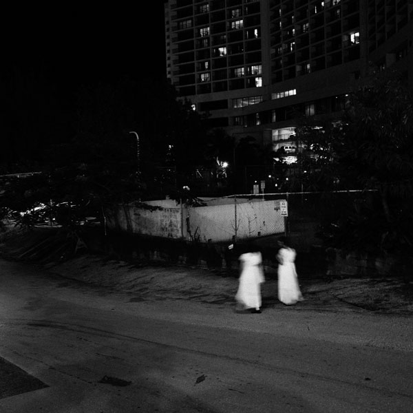 photographs : primula 56