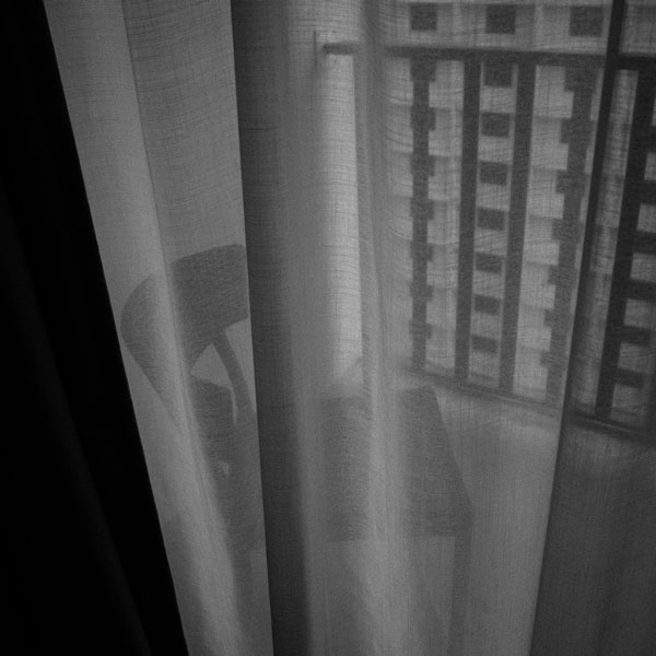 photographs : primula 61