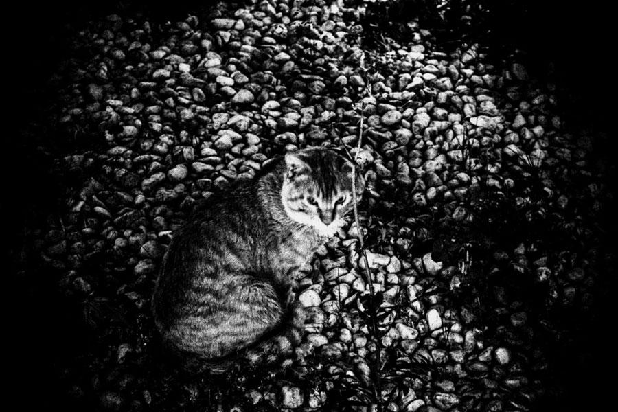 photographs : unravel : 14