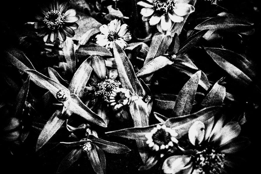photographs : unravel : 19