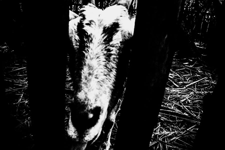 photographs : unravel : 30