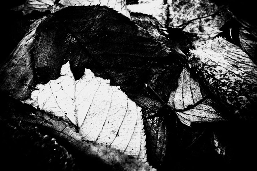 photographs : unravel : 32