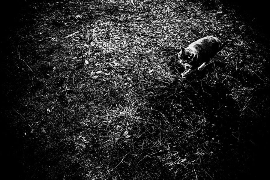 photographs : unravel : 35
