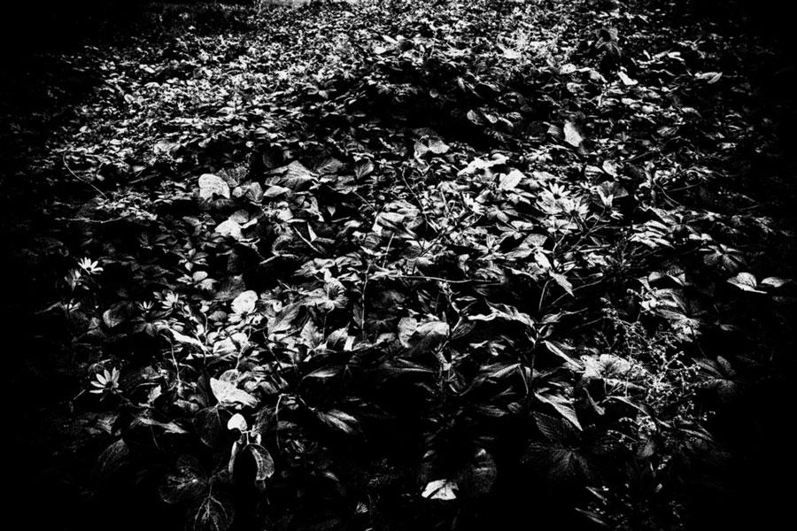 photographs : unravel : 41
