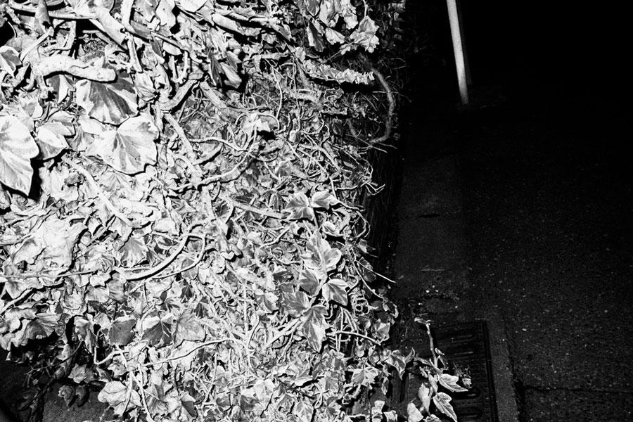 photographs : wanderlust : 30