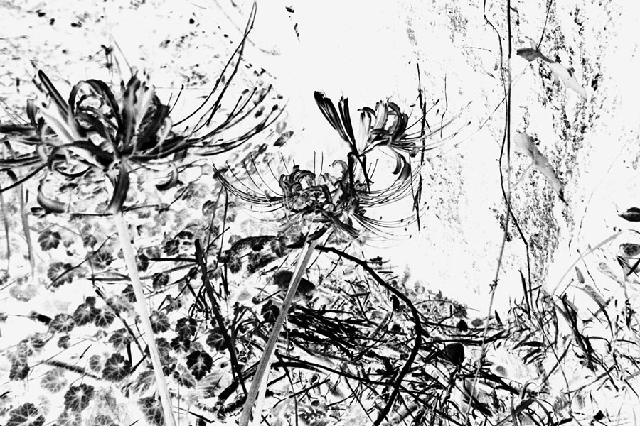 photographs : wanderlust : 56