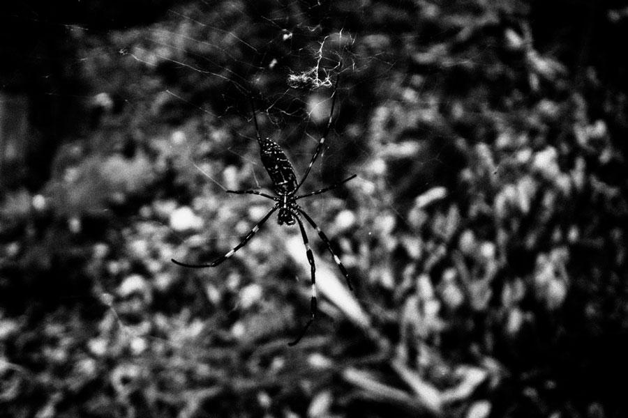 photographs : wanderlust : 57
