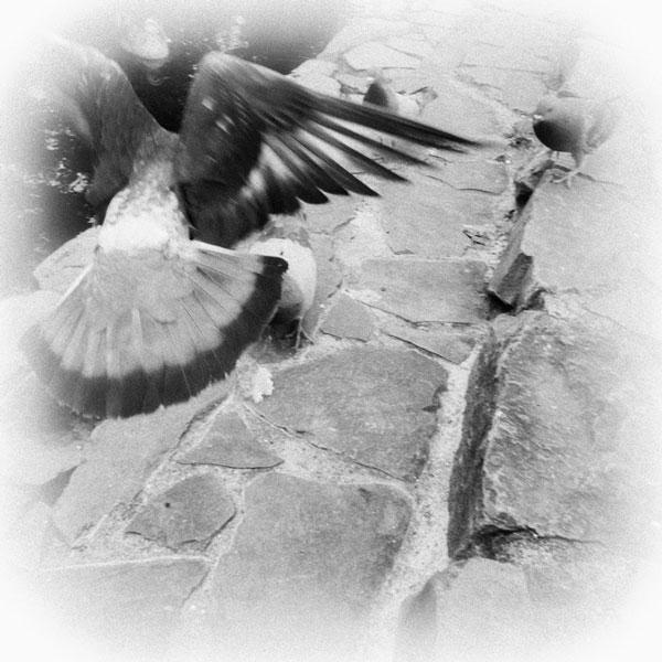 photographs : wanderlust : 58