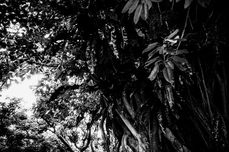 photographs : wanderlust : 59