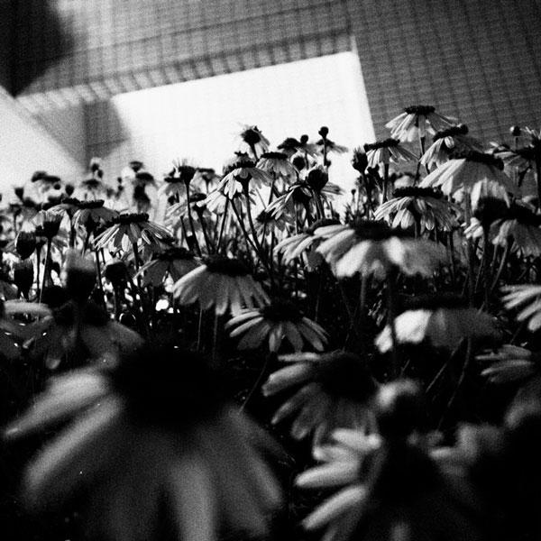 photographs : wanderlust : 63